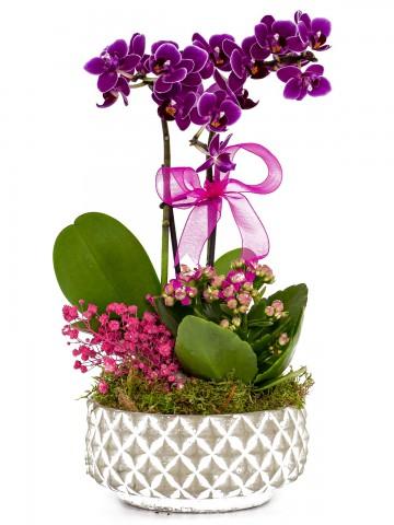 Desenli Saksıda  Mini Orkide ve Kalanchoe Orkideler çiçek gönder