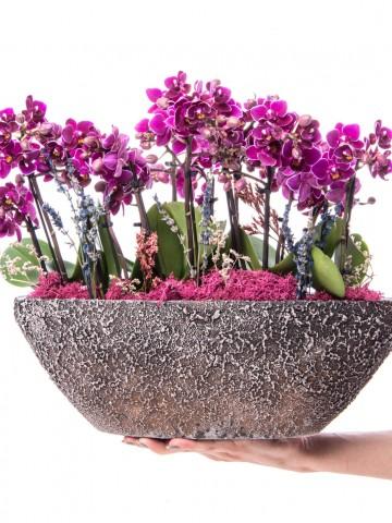 Segreto Serisi Mor Orkide Mix Tasarım Orkideler çiçek gönder