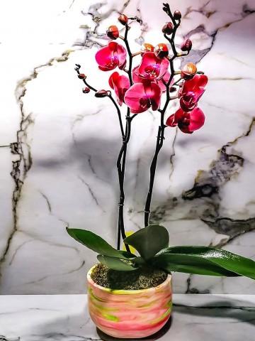 Ebru Sanatı ile Süslenmiş Beton Saksıda 2 Dal Sonbahar Pembesi Orkide Orkideler çiçek gönder