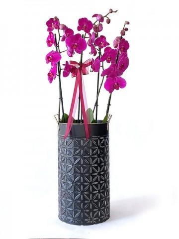 Metal Vazoda 4 Dallı Fuşya Orkide Orkideler çiçek gönder