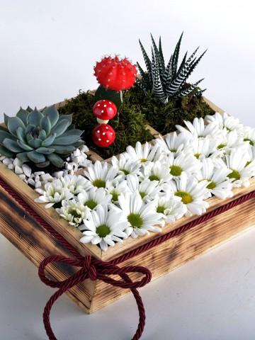 Papatya Bahçesi Teraryum Terarium çiçek gönder