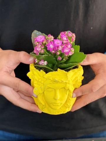 Özel Tasarım Beton Saksıda Kalanchoe Saksı Çiçekleri çiçek gönder