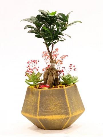 Özel Tasarım Seramik Vazoda Bonsai ve Sukulentler Saksı Çiçekleri çiçek gönder