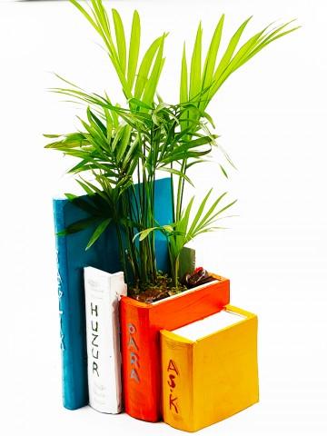 Kitap Saksı Chamadore Bitkisi Terarium çiçek gönder