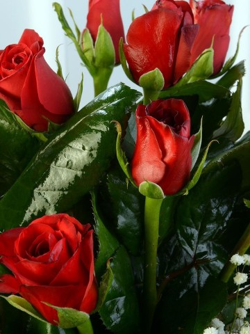 Camda 11 Adet Kırmızı Gül. Aranjmanlar çiçek gönder