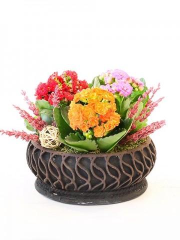 Özel Tasarım Saksıda 3'lü Kalanchoe Saksı Çiçekleri çiçek gönder