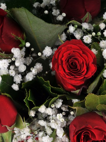 Fanusta 11 Kırmızı Gül Aranjmanı Aranjmanlar çiçek gönder