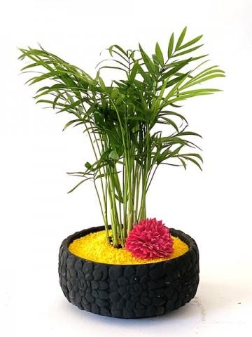 Beton Saksıda Chamadore Bitkisi Saksı Çiçekleri çiçek gönder