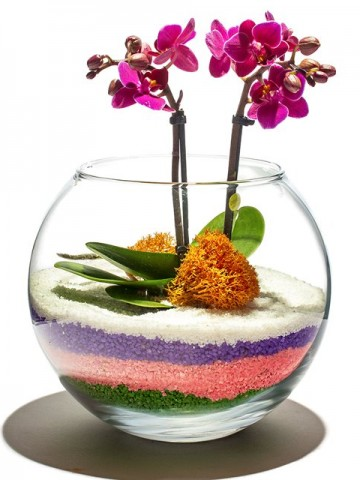 Ahenk Dolu Minyatür Orkide Orkideler çiçek gönder