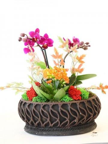 Taş Saksıda Orkide ve Kalanchoe Orkideler çiçek gönder