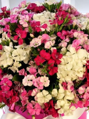 Rengarenk Kutuda Çiçek çiçek gönder