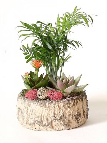 Dekoratif Saksıda Çiçekler Terarium çiçek gönder