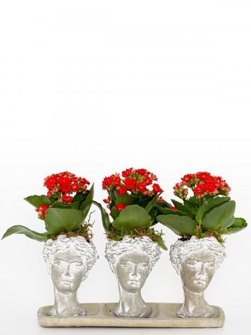 Trio Serisi Helen de Kalanchoe  Saksı Çiçekleri çiçek gönder