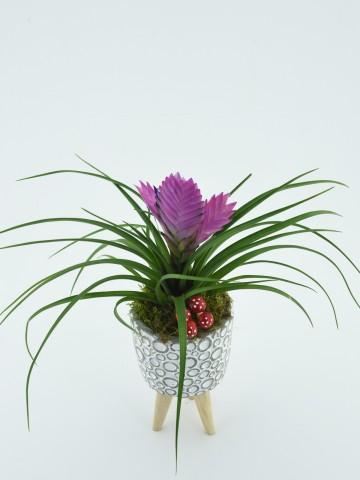 Tillandsia Saksı çiçeği Saksı Çiçekleri çiçek gönder