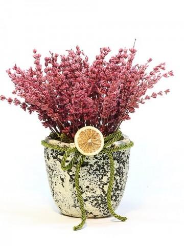 Taş Saksıda Lavanta Saksı Çiçekleri çiçek gönder