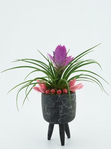 Üç Ayaklı Seramikte Tillandsia Bitkisi Saksı Çiçekleri çiçek gönder