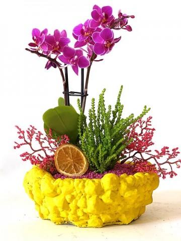 Minyatür Orkide Bahçesi Orkideler çiçek gönder