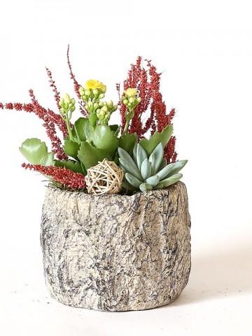 Özel Tasarım Saksıda Echeveria Ve Kalanchoe Saksı Çiçekleri çiçek gönder