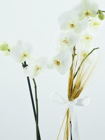 Sepet Desenli Seremikte  Beyaz Orkide Orkideler çiçek gönder