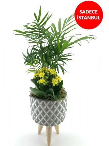 Üç Ayaklı Tasarım Vazoda Şık Areka Bitkisi Saksı Çiçekleri çiçek gönder