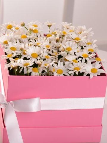 Papatyaların Gizemi Kutuda Çiçek çiçek gönder