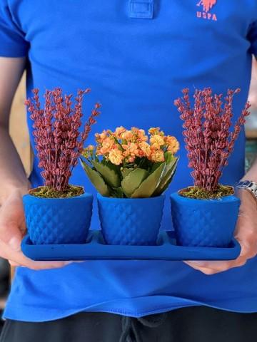 Üçlü Beton Saksıda Kalanchoe ve Lavanta Saksı Çiçekleri çiçek gönder