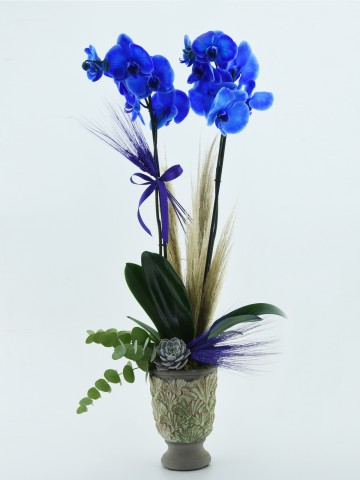 Mavi Orkide Serisi Orkideler çiçek gönder