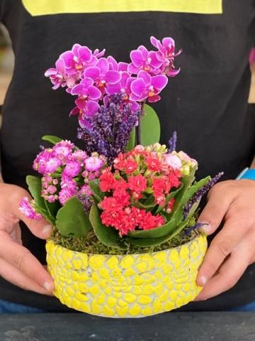 Beton Saksıda Mini Orkide ve Kalanchoeler Orkideler çiçek gönder