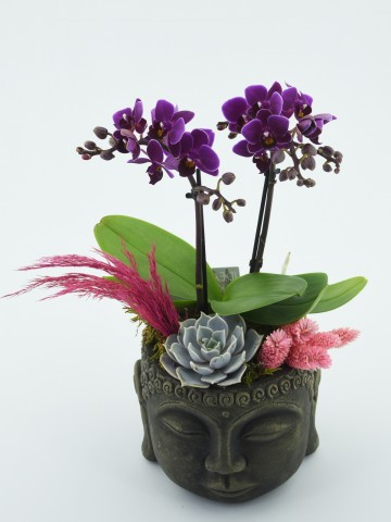 Mini Orkide Çiçeği Orkideler çiçek gönder
