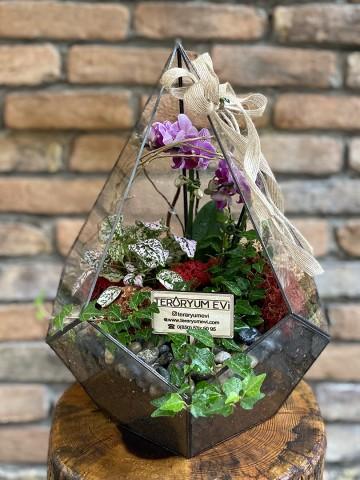 Geometrik Camda Mini Orkide Terarium çiçek gönder