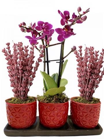 Üçlü Beton Saksıda Orkide ve Lavanta Orkideler çiçek gönder