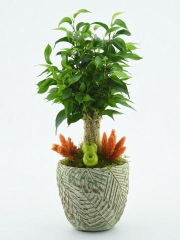 Özel Tasarım Minyatür Süs Bitkisi Saksı Çiçekleri çiçek gönder