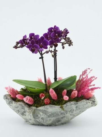 Kayık Seramikte Mini Orkide Çiçeği Orkideler çiçek gönder