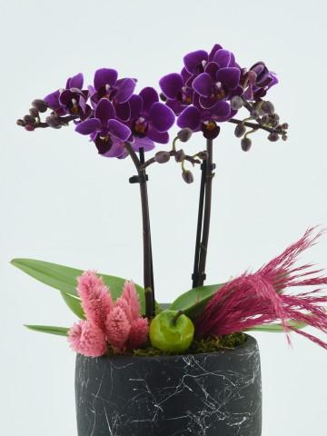 Mini orkideli Doğal Tasarım Orkideler çiçek gönder