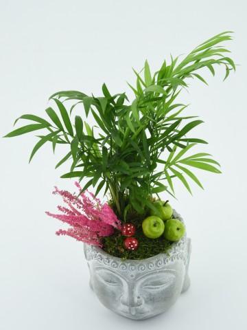 Mini Areka Bitkisi Saksı Çiçekleri çiçek gönder