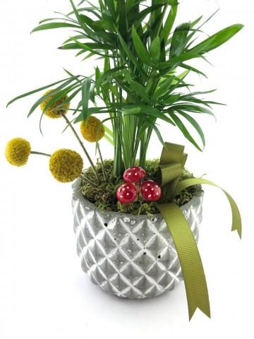 Kelebek Beton Saksı da Chamaedorea Bitkisi (Dağ Palmiyesi) Saksı Çiçekleri çiçek gönder