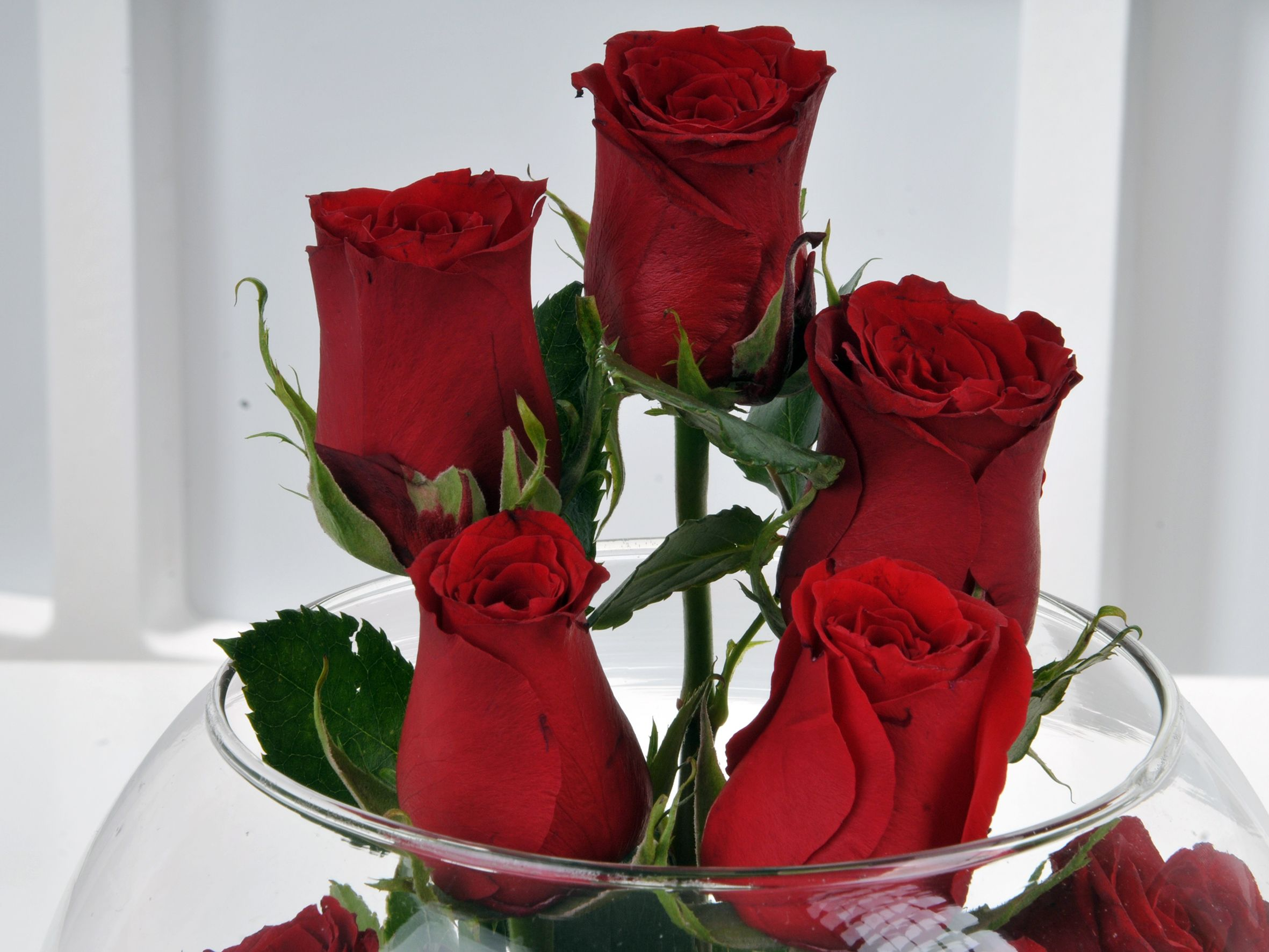 Fanusta 9 Kırmızı Gül Aranjmanı Aranjmanlar çiçek gönder