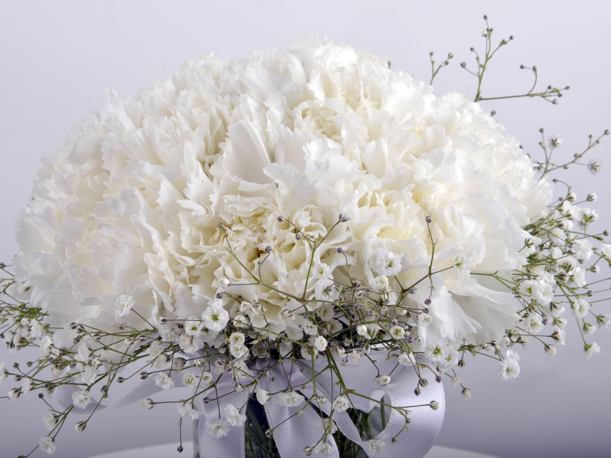 Karanfil Kokulu Masumiyet Aranjmanı. Aranjmanlar çiçek gönder