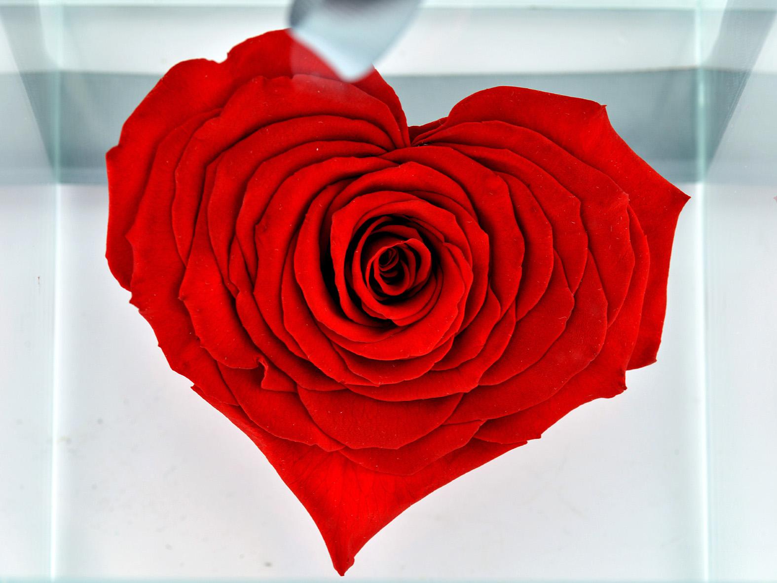 Harika Ötesi Kalpli Solmayan Gül Solmayan Güller  çiçek gönder