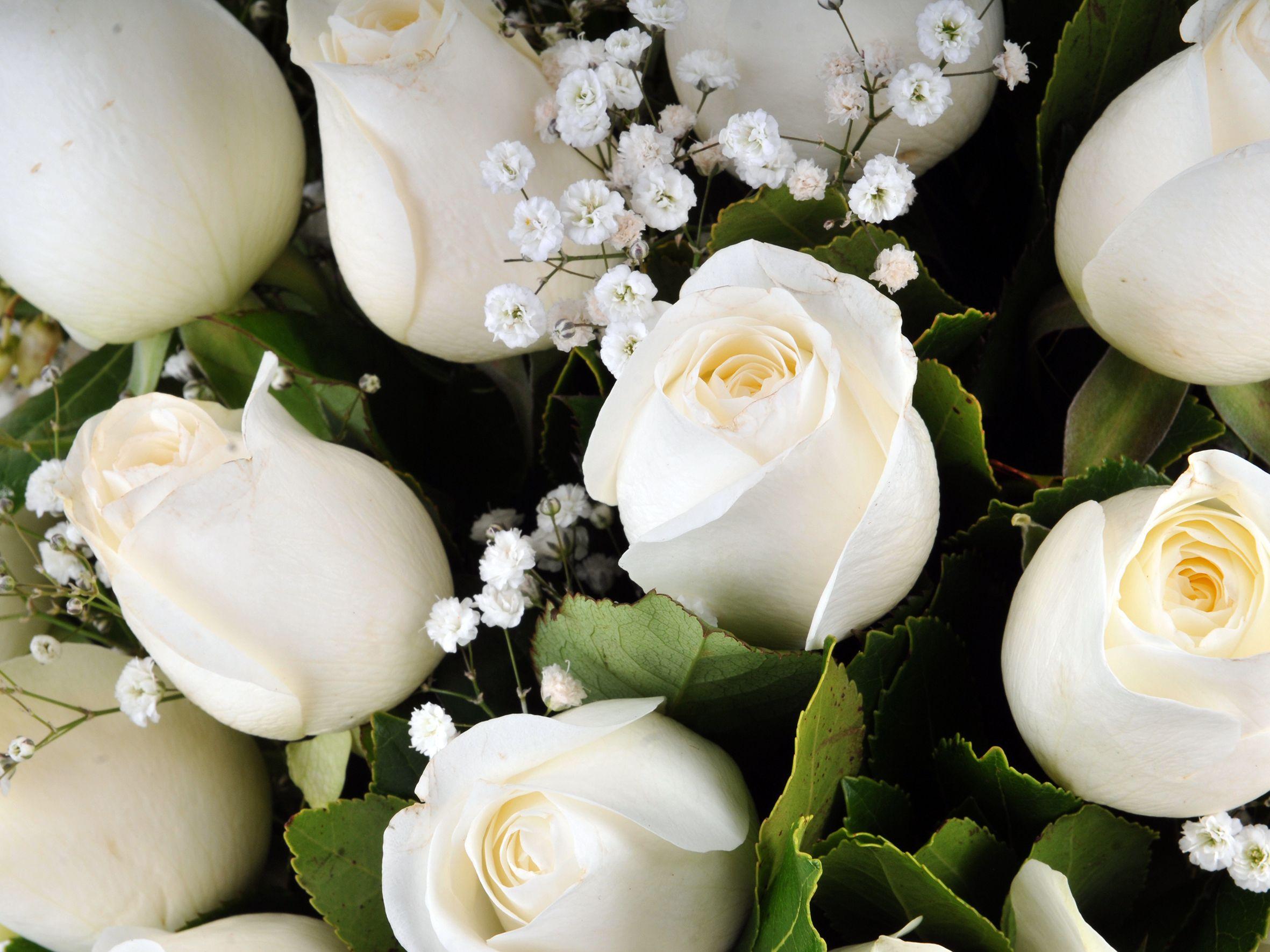 Vazoda 19 Beyaz Gül.. Aranjmanlar çiçek gönder