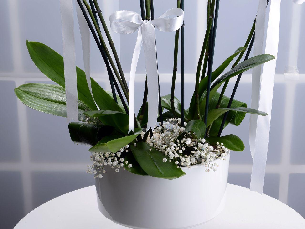 İhtişam ve Güzelliğin Buluşması Orkideler çiçek gönder