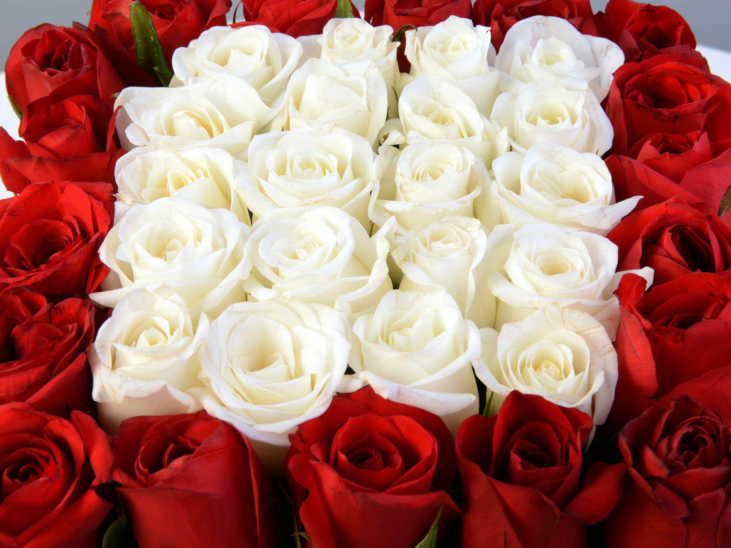 Beyaz Kare Kutuda Gül Aranjmanı. Kutuda Çiçek çiçek gönder