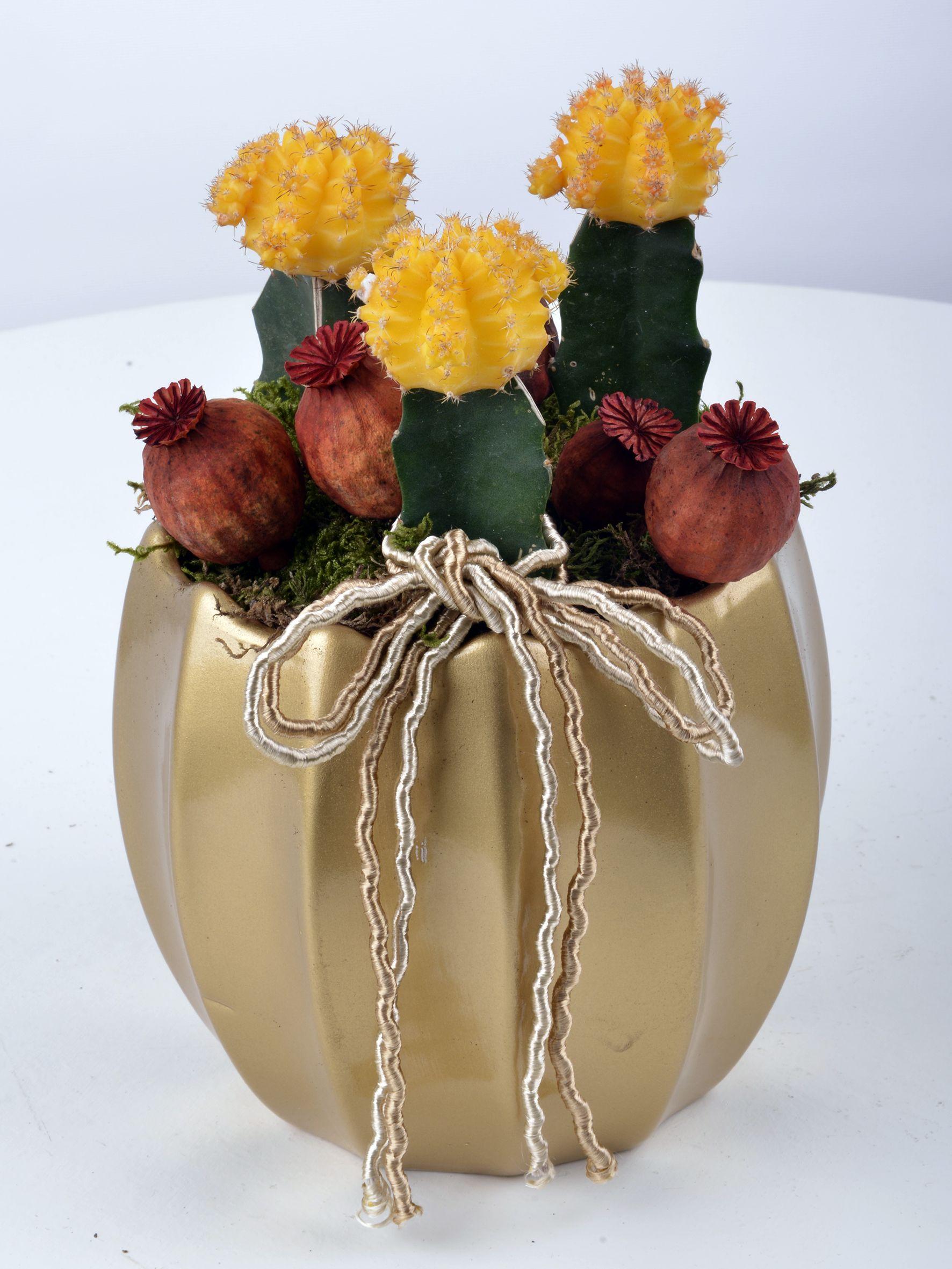 Renkli Kaktüs Dünyası  çiçek gönder