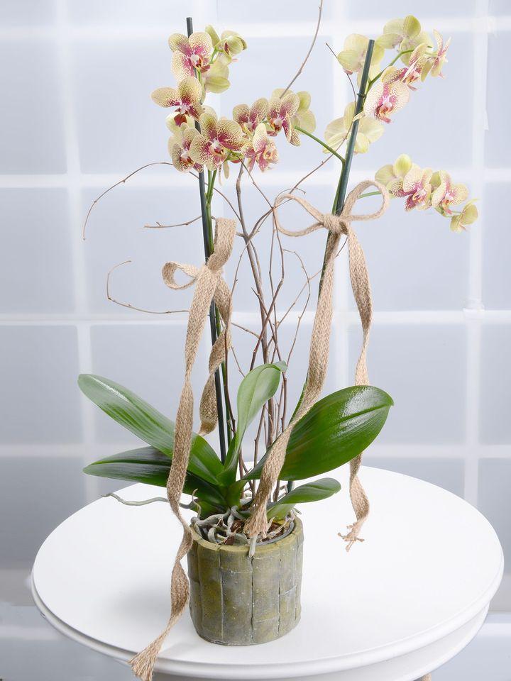 Bahar Dalları Alev Rengi Orkideler  çiçek gönder