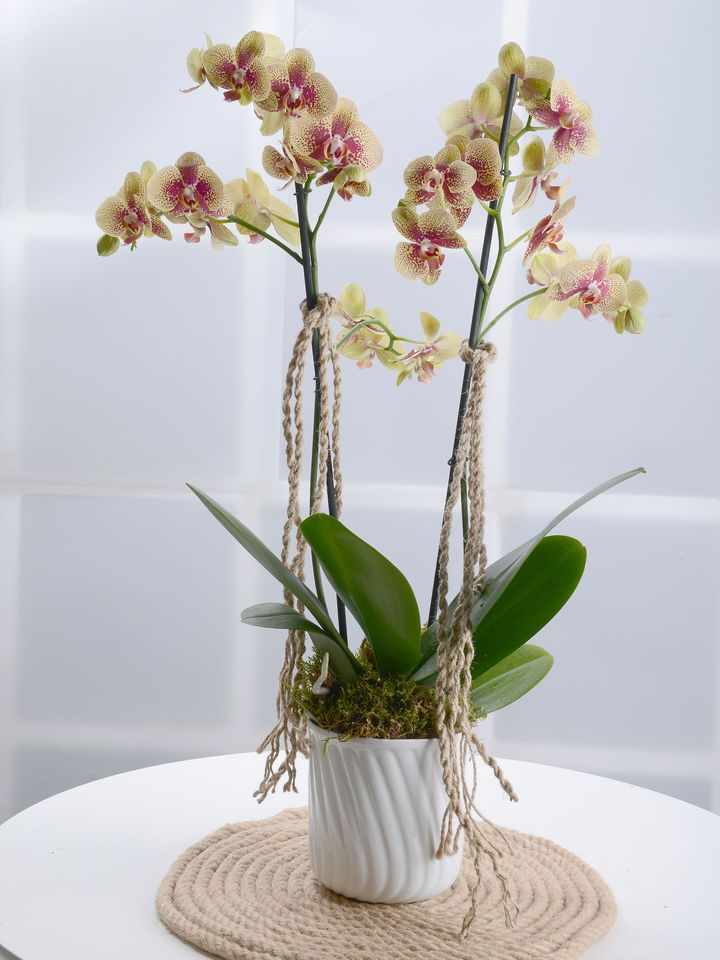 Alevli Orkide Çiçeği  çiçek gönder