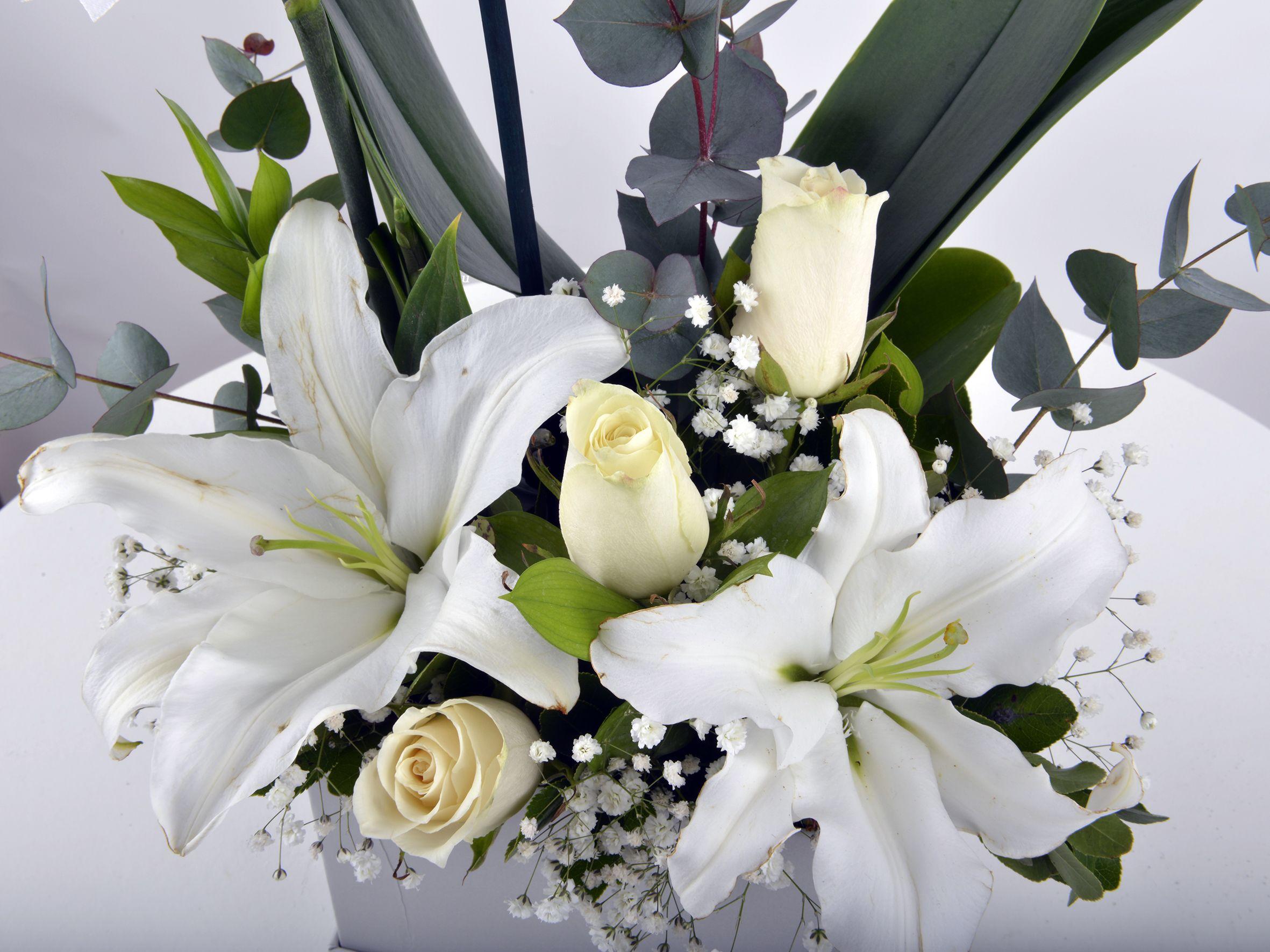 Tek Dallı Beyaz Orkide Çiçeği.. Orkideler çiçek gönder