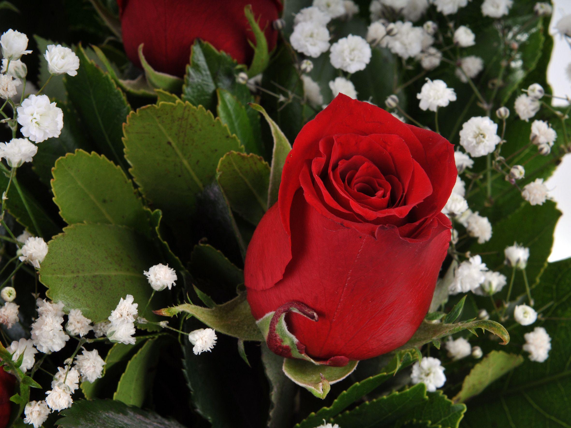 Vazoda 5 Kırmızı Gül Çiçek Arajmanı.. Aranjmanlar çiçek gönder