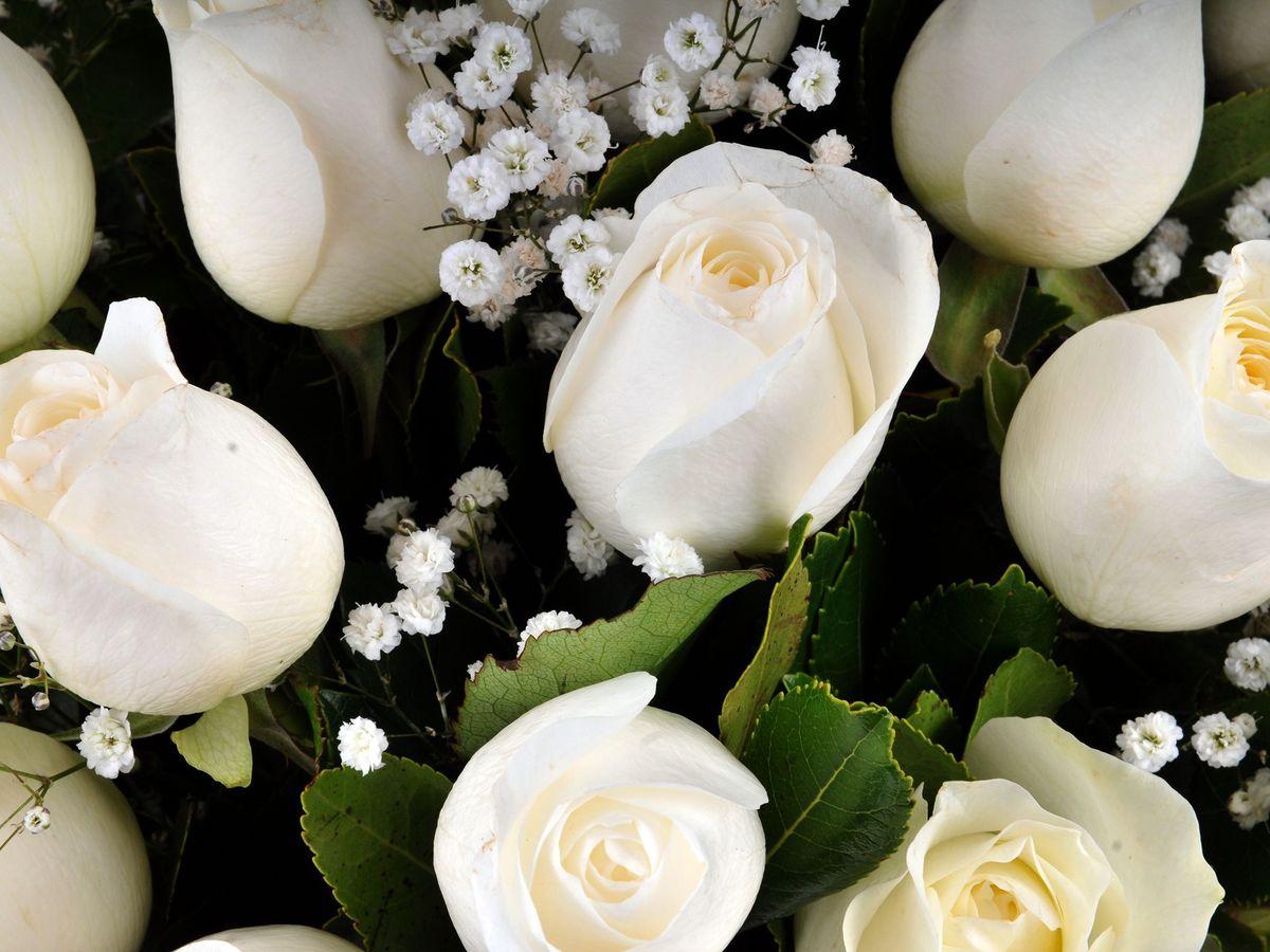 Hayalden Gerçeğe 17 Beyaz Gül Aranjmanlar çiçek gönder