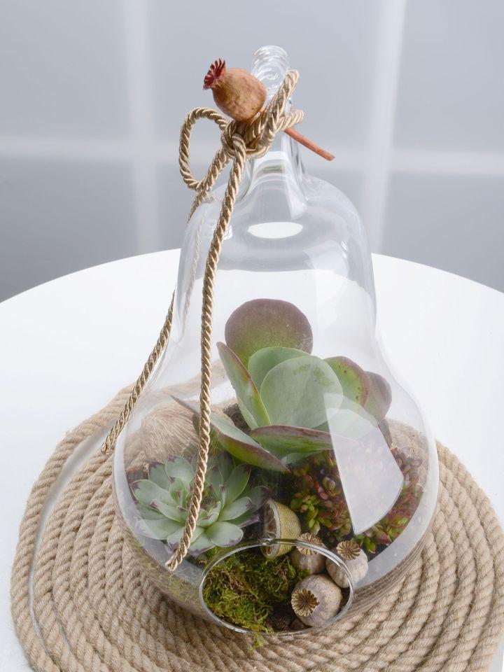 Armut Camda Sukulentler Terarium çiçek gönder