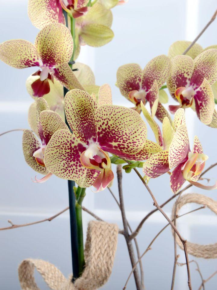 Bahar Dalları Alev Rengi Orkideler Orkideler çiçek gönder